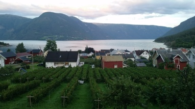View from the Eplet hostel in Sognefjord. I slept in a tent across from their orchard, where they grow apples and raspberries. The hostel produces 12,000 bottles of juice every year!