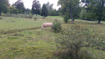One of 3 horses I saw in Djurgården