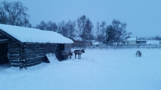 Even the reindeer get log cabins