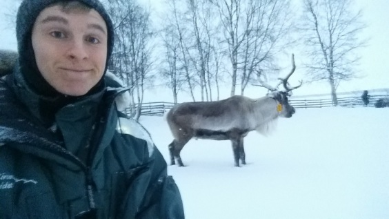 Obligatory reindeer selfie, but the reindeer did not oblige