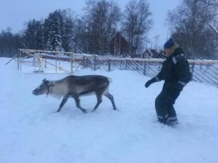 Reindeer aren't huge on people sneaking up on them