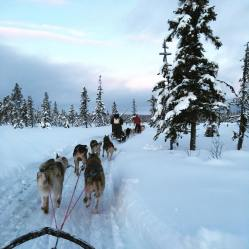 Seeing the arctic's incredible scenery from a dogsled is a must-do