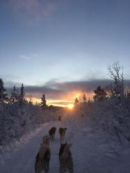 As many sunset dogsled pictures as I post, I still can't convey the feeling of driving it